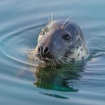This week's photograph of a seal in Campbeltown Loch was submitted by regular contributor Bob Goodman