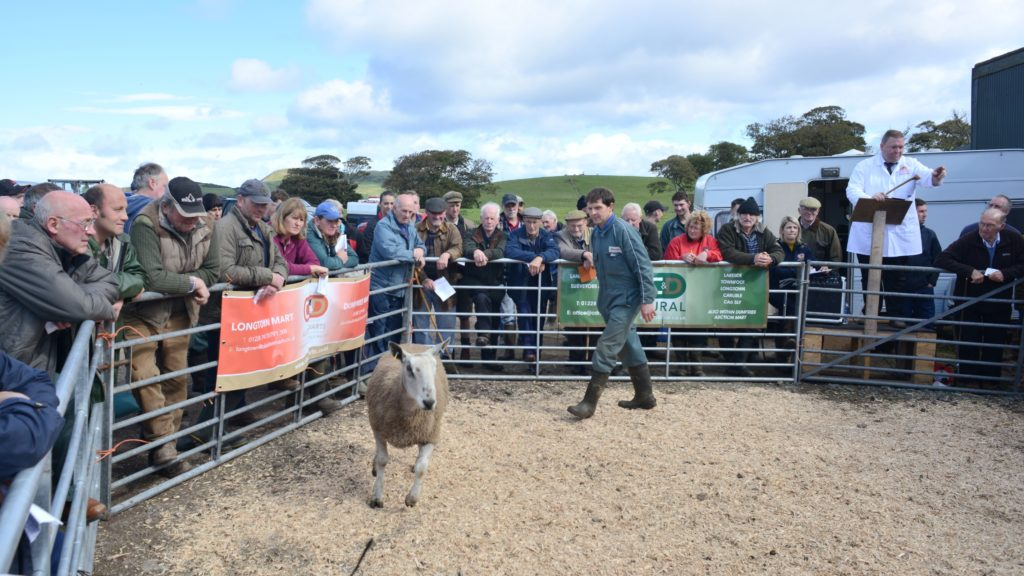 Sellers anticipating top prices at sheep sale