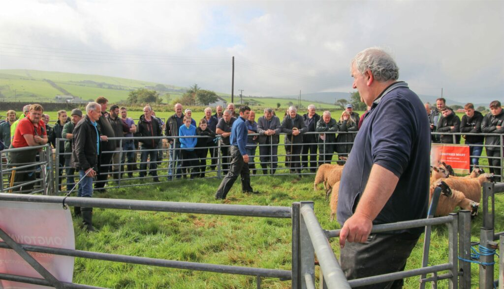 Kevin MacIntyre, Glenahervie, in the ring; he broke his own £900 record, set last year, with the sale's first ever four-figure price achieved, before the next tup, from Thomas Cameron, Gartvaigh, broke the record again.