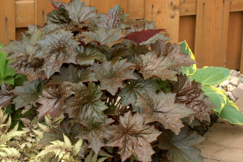 Gardening tips for adding autumn colour