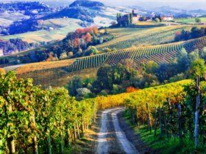 Piedmont Italy - Cover