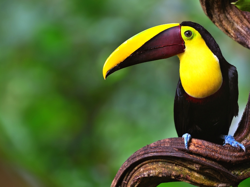 Natural Wonders of Costa Rica Escorted Tour