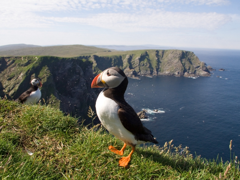 Scenic Scotland and Norway Cruise