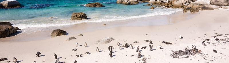 Where Oceans Meet Escorted Tour