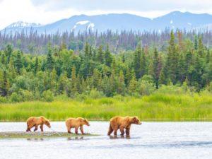 wildlife spots