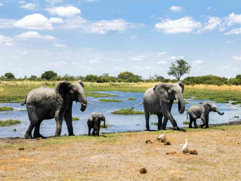 World Elephant Day - Chobe National Park