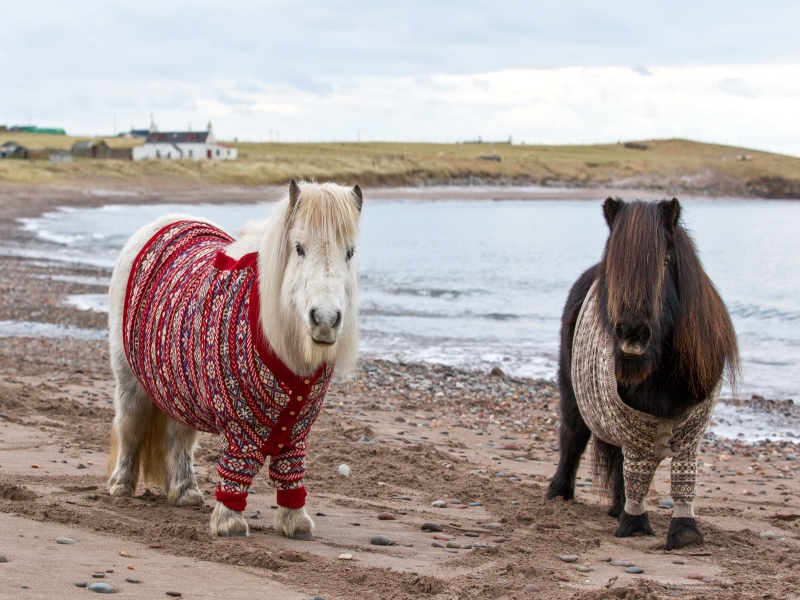 Knitting in the Shetland Isles