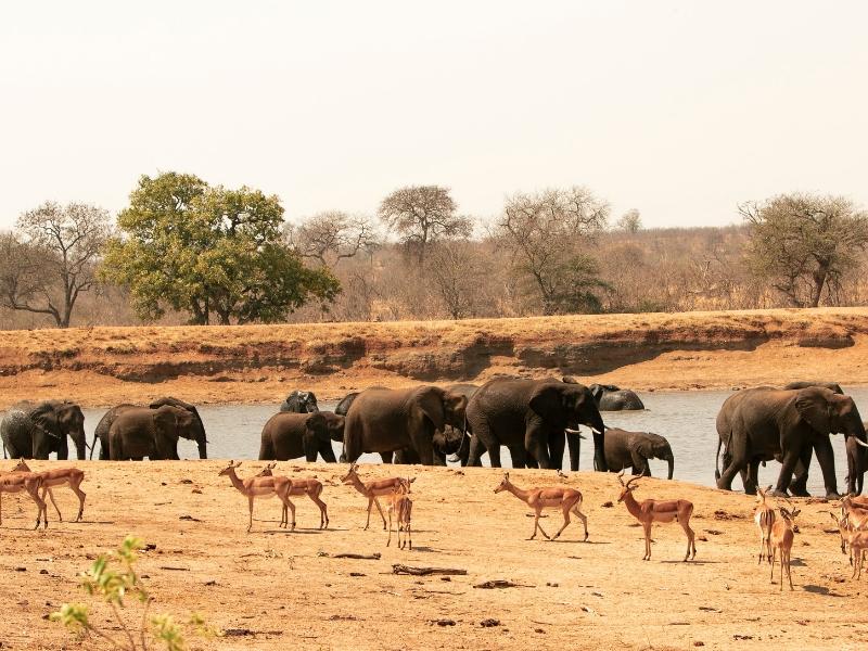 South Africa Wildlife - Kruger National Park