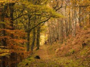 Autumn Woods