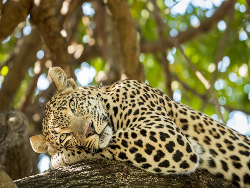 Africa Fly Cruise
