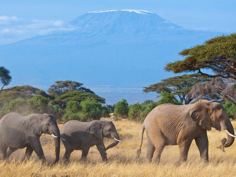 Kenya - Beach & Safari