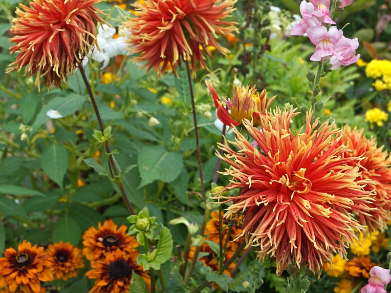 Flowers Monet gardens
