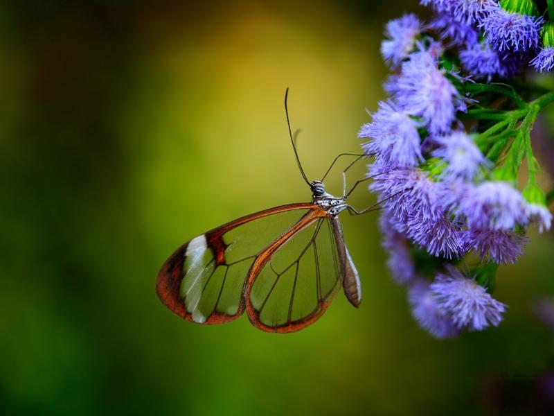 Cosat Rica Butterflys