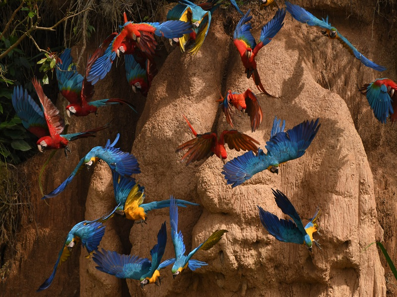 Peru with Amazon