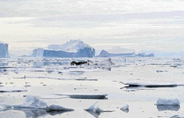 Three oil companies have handed back exploration permits in Greenland