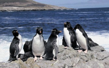 INDUSTRY VIABLE: Rockhopper is downplaying any  political risk to its Falkland developments.