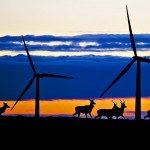 Green energy technology 'offsetting climate policy bill rises'