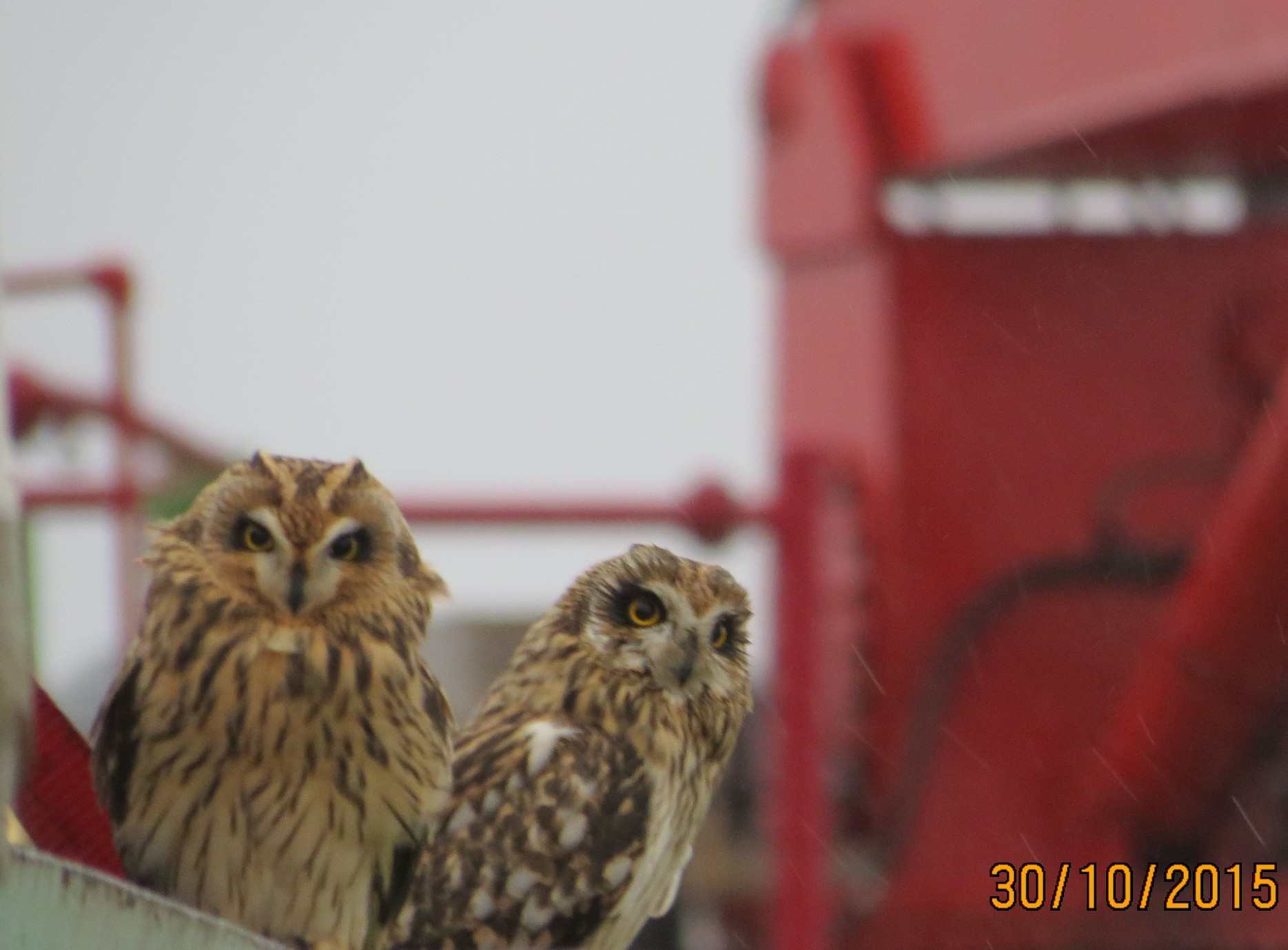 Owls spotted on the BW Athena