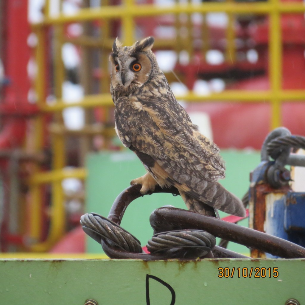 The North Sea is home to diverse wildlife, not least the family of owls spotted on the BW Athena