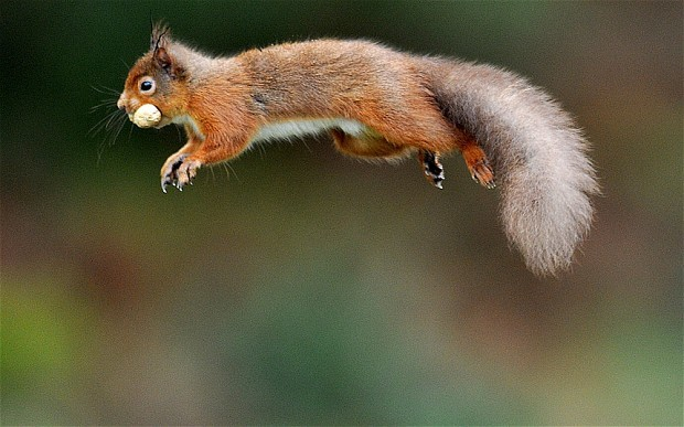 Squirrels, hackers and how to connect to the National Grid