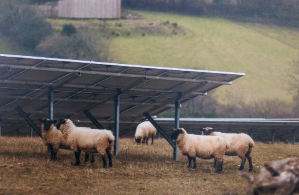 Sheep will still be able to graze in the developments at Speyslaw and Milltown Airfield once they are complete.