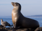 The Sea Lion development is expected to reach sanction later this year.