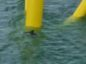 Dolphins at Aberdeen Offshore Wind Farm.