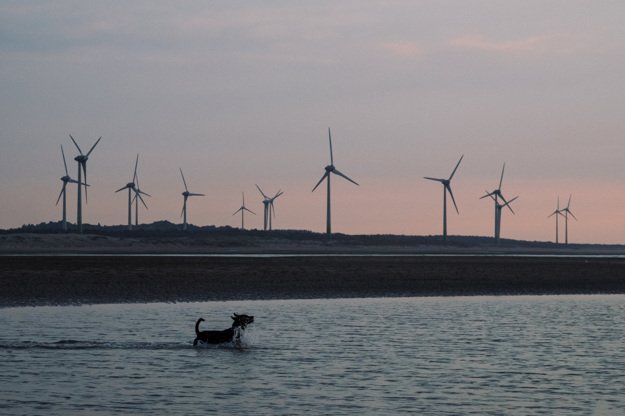 A dog swims as wind turbines stand along a beach in Miaoli County, Taiwan, on Thursday, July 26, 2018. Since a disastrous 2011 reactor meltdown in Japan, more than 1,400 miles (2,250 kilometers) away, Taiwan has rewritten its energy plans. President Tsai Ing-wen ordered all of the country's nuclear reactors to shut by 2025. Photographer: Billy H.C. Kwok/Bloomberg