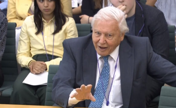 Naturalist Sir David Attenborough giving evidence to the House of Commons Business, Energy and Industrial Strategy Committee,  PRESS ASSOCIATION Photo. Picture date: Tuesday July 9, 2019. Sir David is being questioned on a range of issues relating to climate change and the country's ambition to have net-zero emissions by 2050. See PA story ENVIRONMENT Attenborough. Photo credit should read: House of Commons/PA Wire