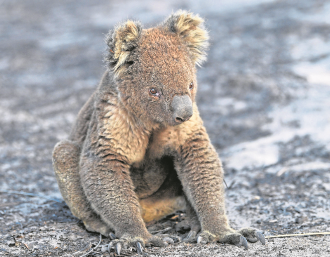 Bushfires have devastated Australia and its wildlife – while its government has come under fire over its policies