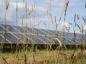 Solarcentury win substantial financial backing.