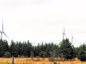 Seven million trees were felled for north of Scotland wind farms.