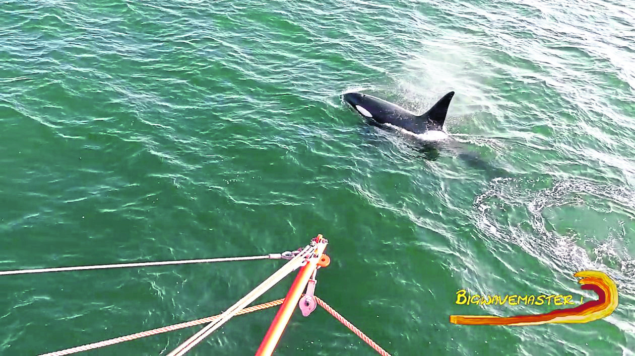 Orcas spotted at a North Sea oil field. Credit Life at Sea on an ERRV.