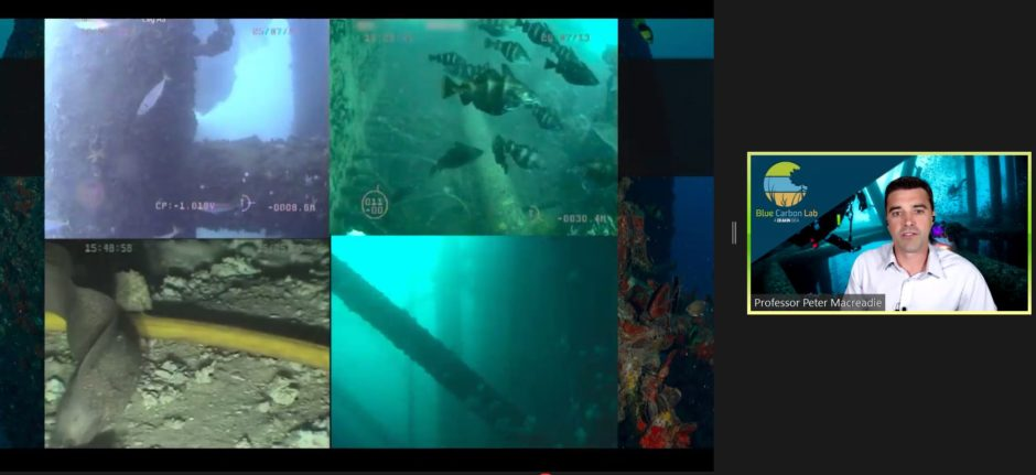 Click to zoom.Peter Macreadie shared extensive ROV footage of marine life found on or near oil platforms