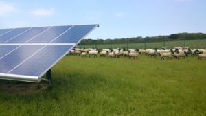 BP aiming to marry renewables and farming after securing Italian solar projects
