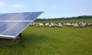 BP solar projects