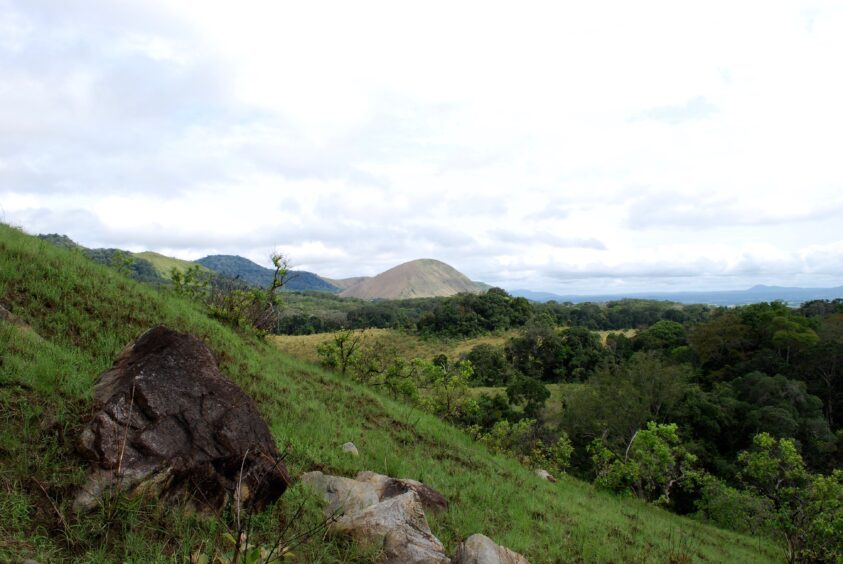 Green landscape with scrub, hill in the background