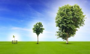 Viper Innovations will plant trees to help achieve its ambition of becoming carbon neutral.
