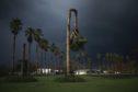 A palm tree damaged by Hurricane Ida in Galliano, Louisiana, U.S., on Tuesday, Aug. 31, 2021. Photographer: Luke Sharrett/Bloomberg