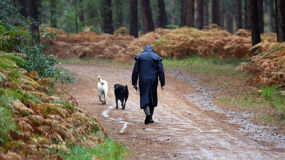 Dog owners are to be warned using new signs sprayed on the ground.