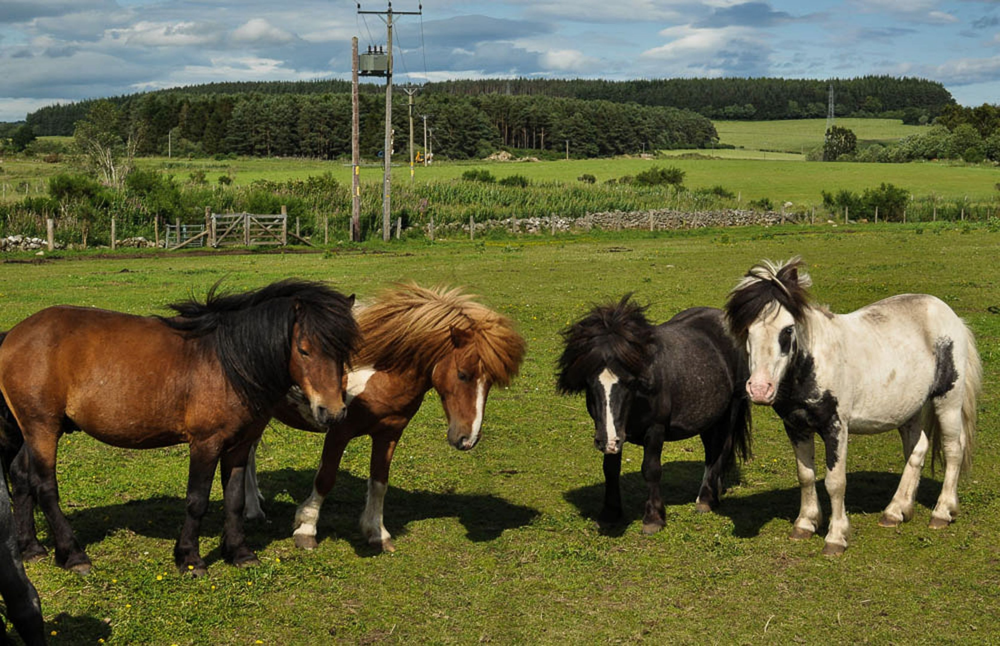 Ponies at the Drumoak centre. Picture Courtesy of Scottish SPCA.