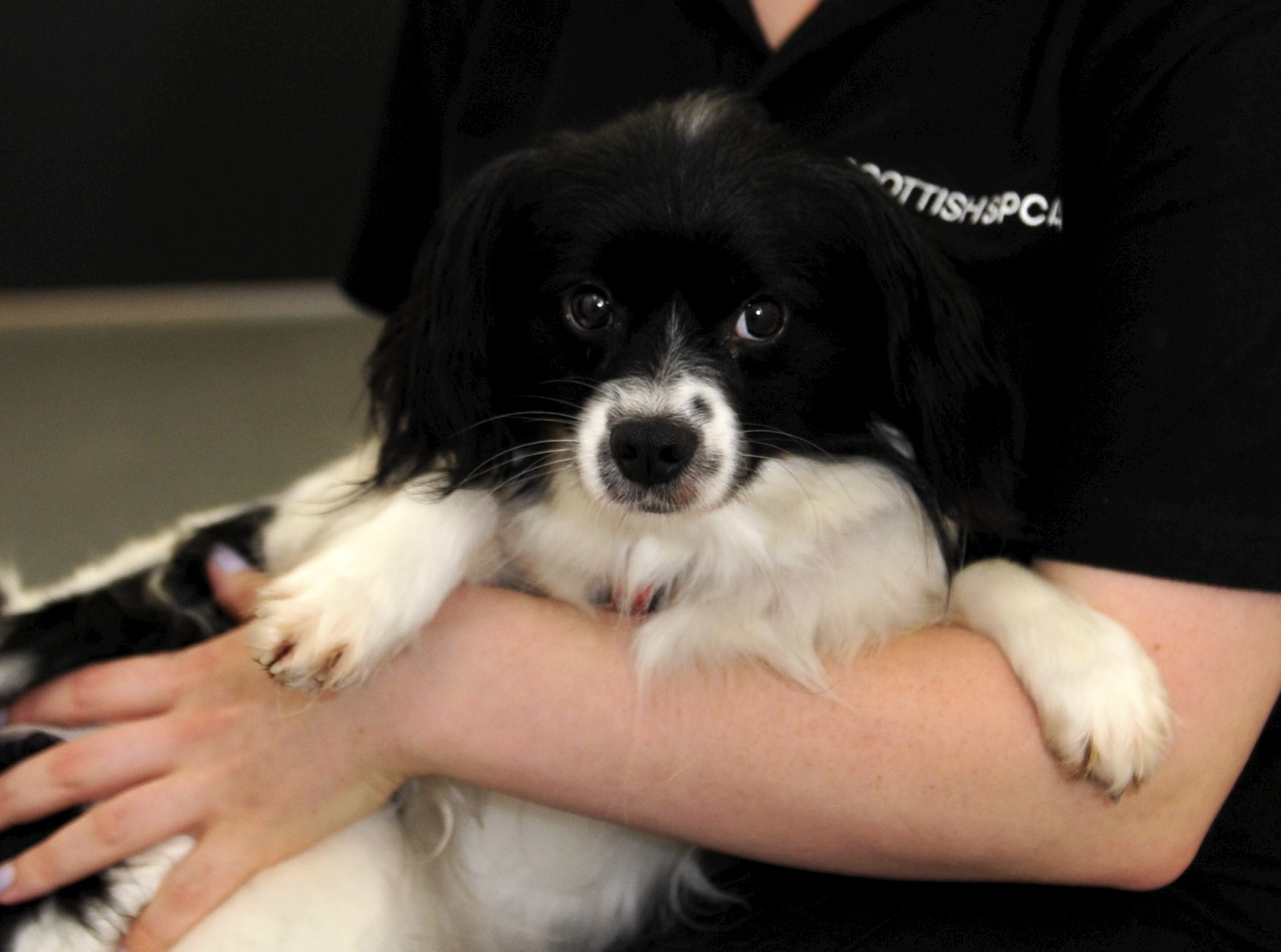 Papillion Asia just one of the animals waiting to be rehomed.  Pictures by Heather Fowlie