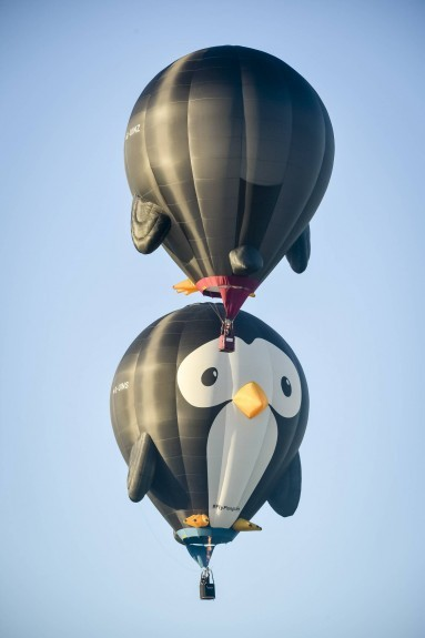 Penguin shaped hot air balloons 'Puddles' and 'Splash' lift off during the first mass ascent at the 37th Bristol International Balloon Fiesta at Ashton Court Estate, Bristo. Ben Birchall/PA Wire