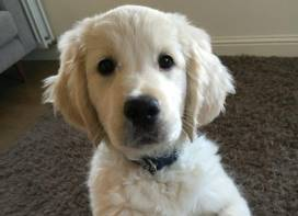 David Robb is pleading with potential employers not to let his puppy Monty, pictured, go hungry.