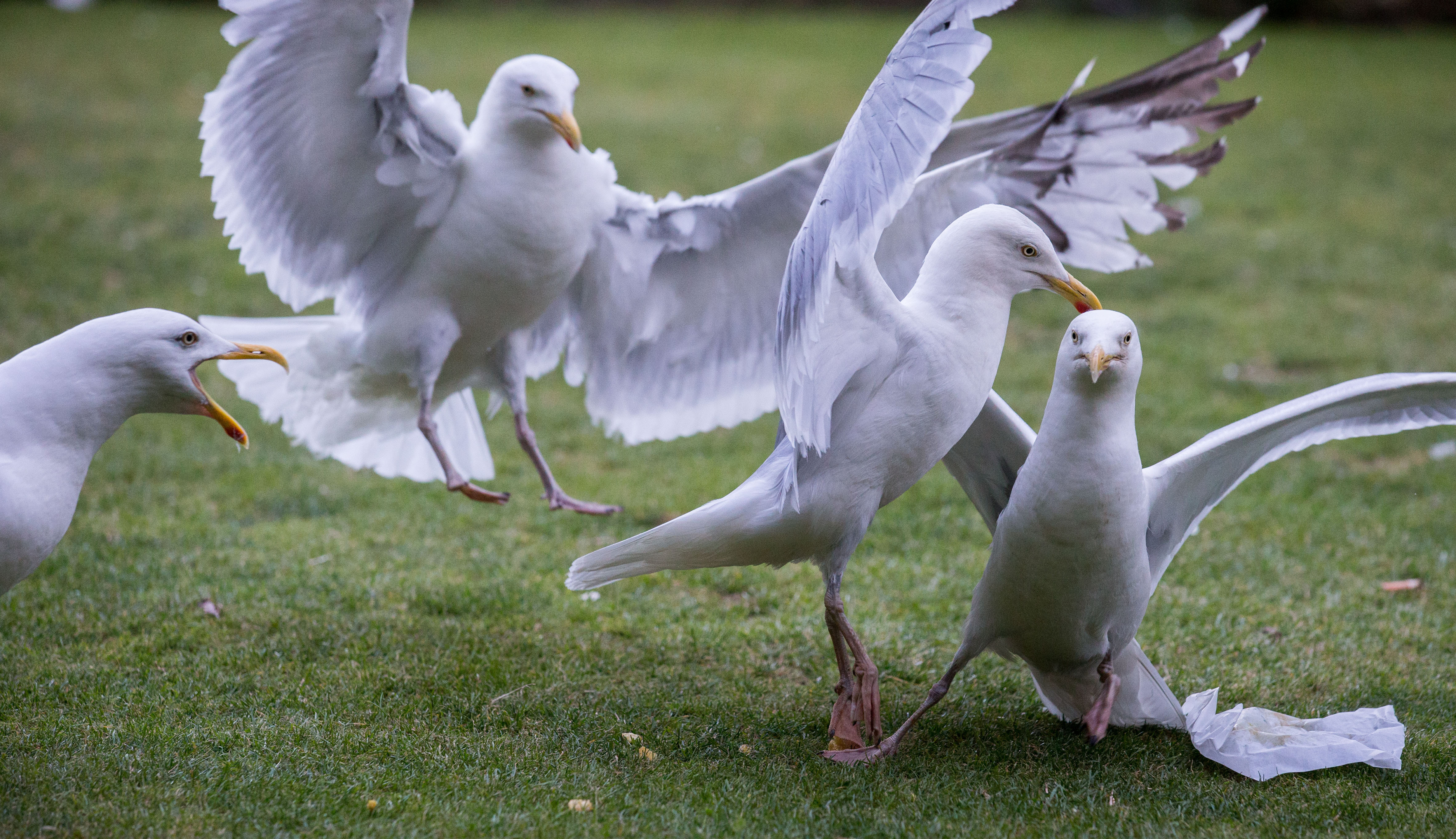 Bird Free has proved successful at Tillydrone's Pennan Road tenement block and has kept seagulls from landing.
