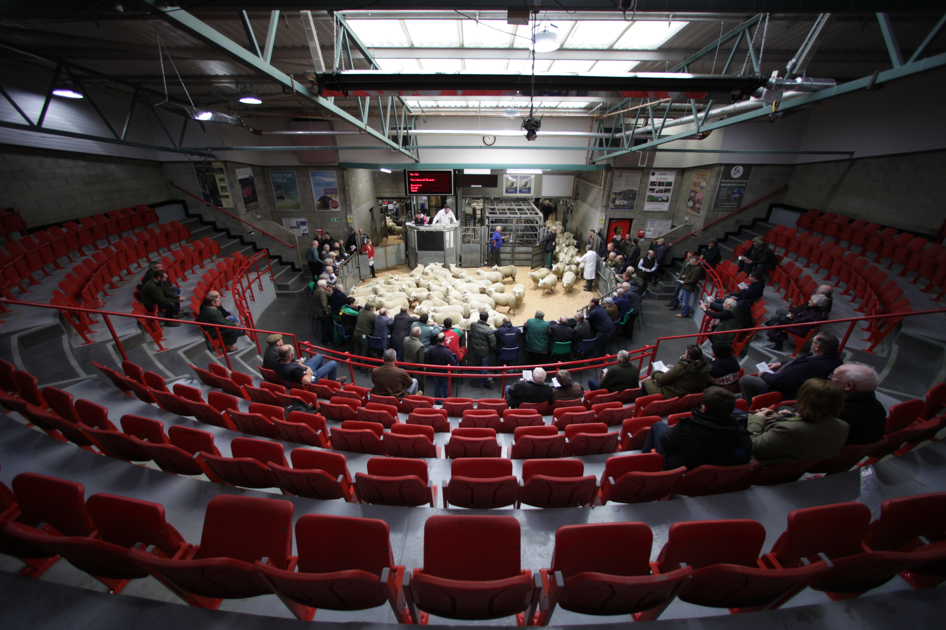 Thainstone Mart auction ring. Picture: BBC Scotland