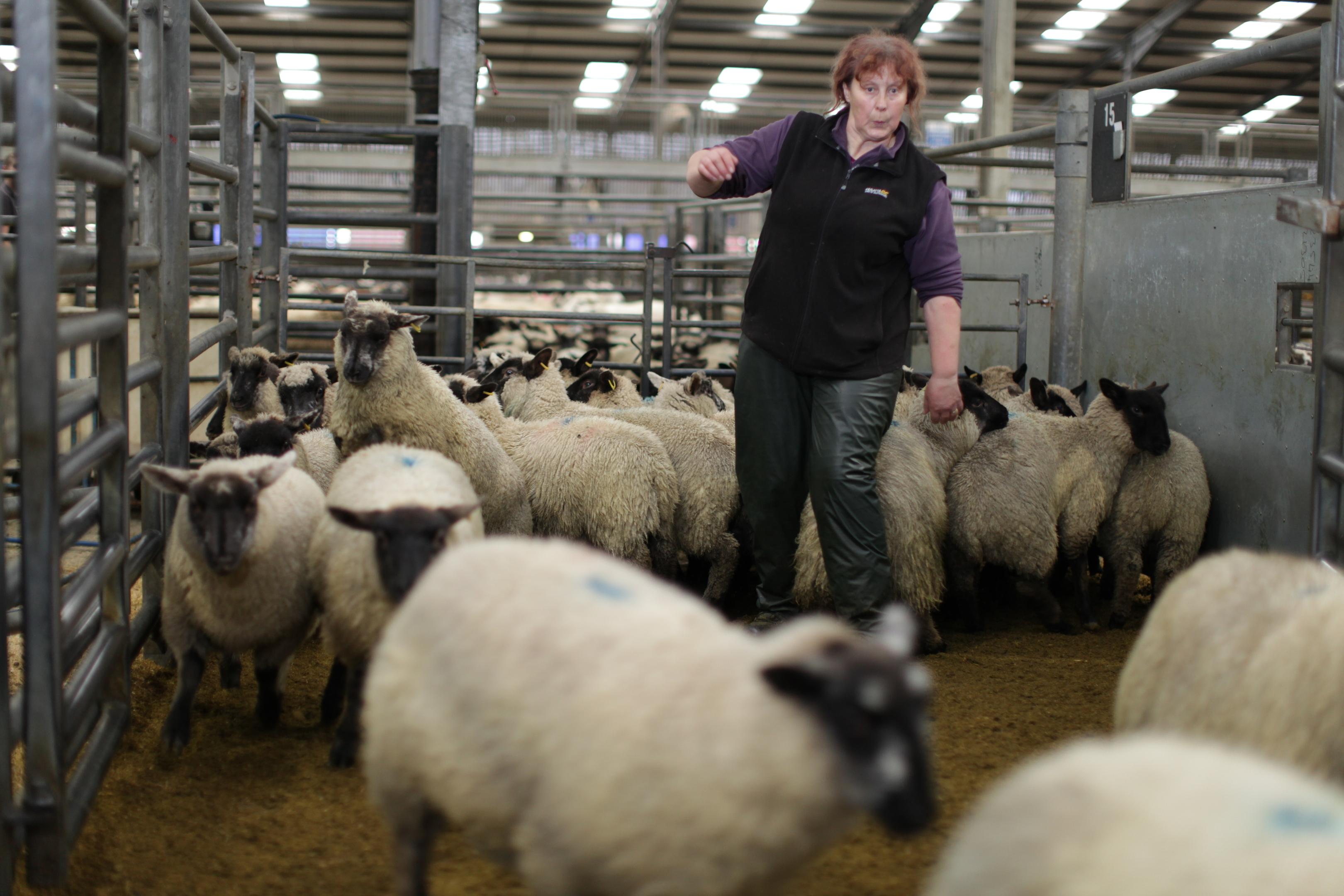 Livestock seller Jacqueline Strathdee