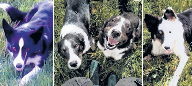 Three of the dogs have been recovered