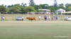 A bull charges a pitch in Australia.