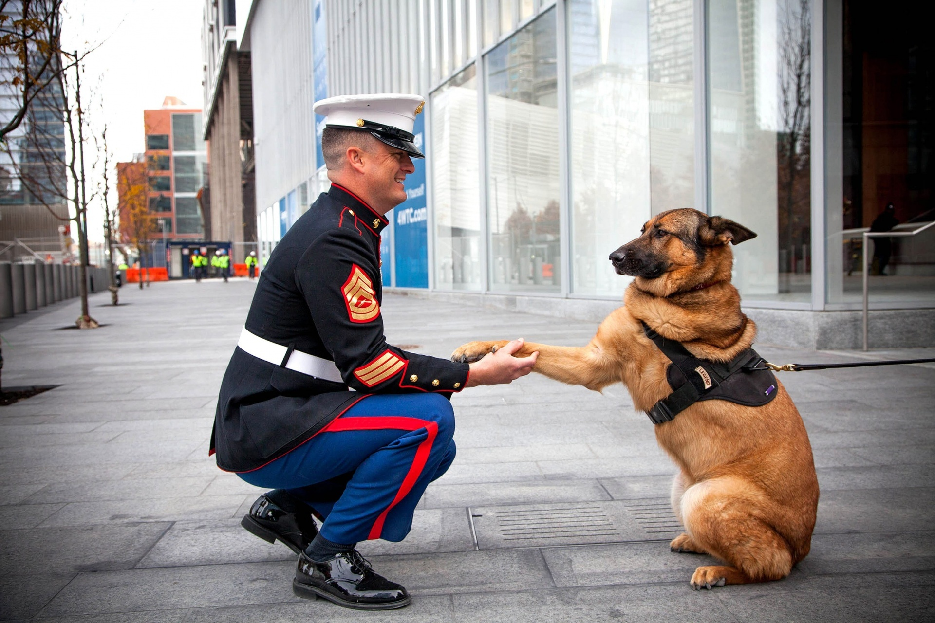 Retired US Marine Corps dog Lucca, who has been honoured with the PDSA Dickin Medal - the animal equivalent of the Victoria Cross, after she protected the lives of allied troops in Iraq and Afghanistan.